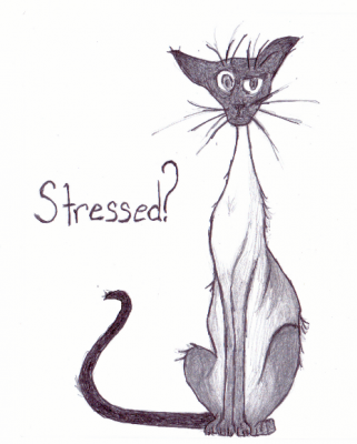 "A picture of a thin cat with wiry whiskers and the word ""Stressed?"" to the left side"
